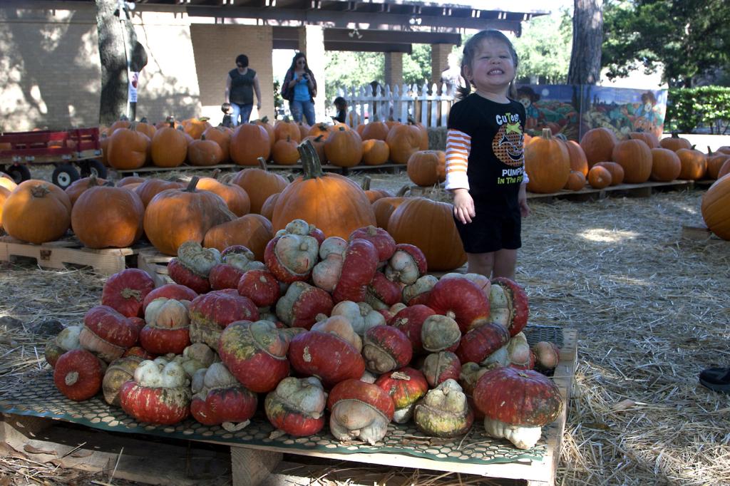 pumpkinpatch2014_02