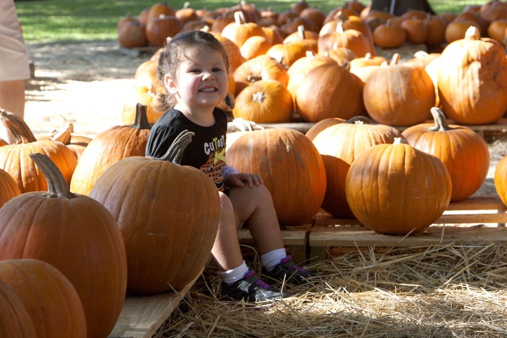 pumpkinpatch2014_03