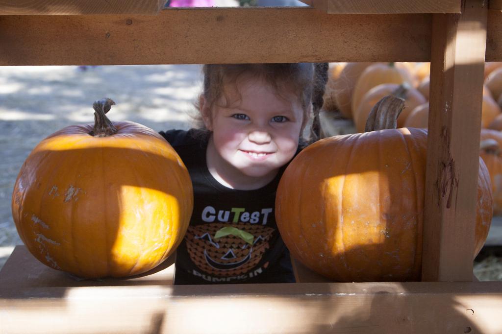 pumpkinpatch2014_07