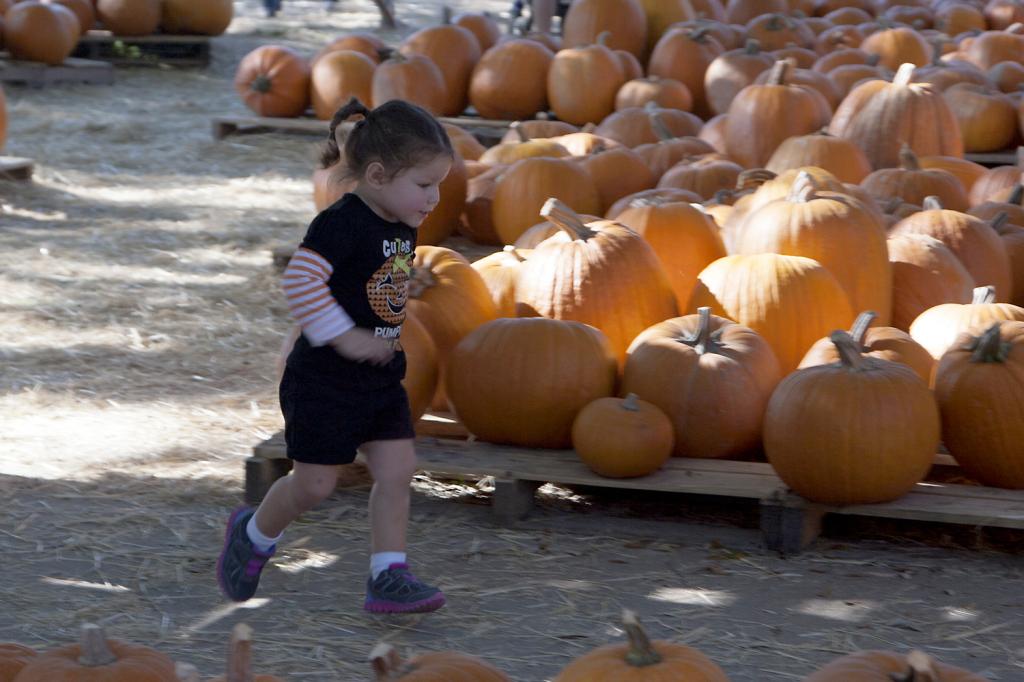 pumpkinpatch2014_10