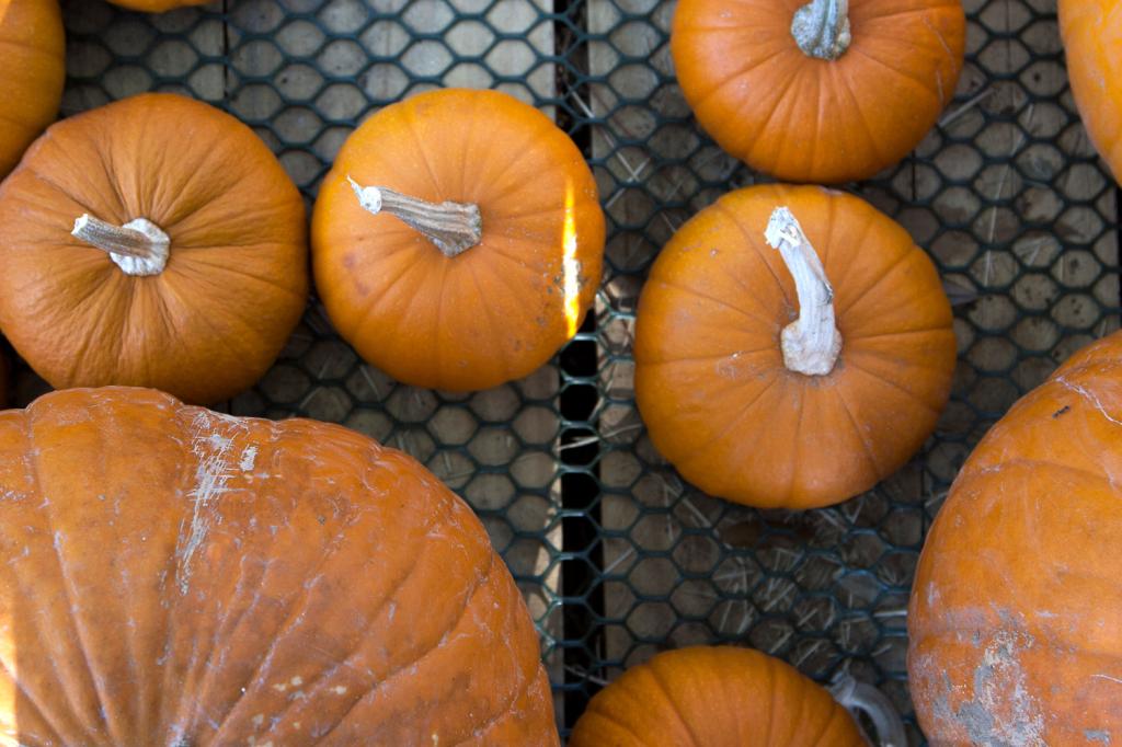 pumpkinpatch2014_11
