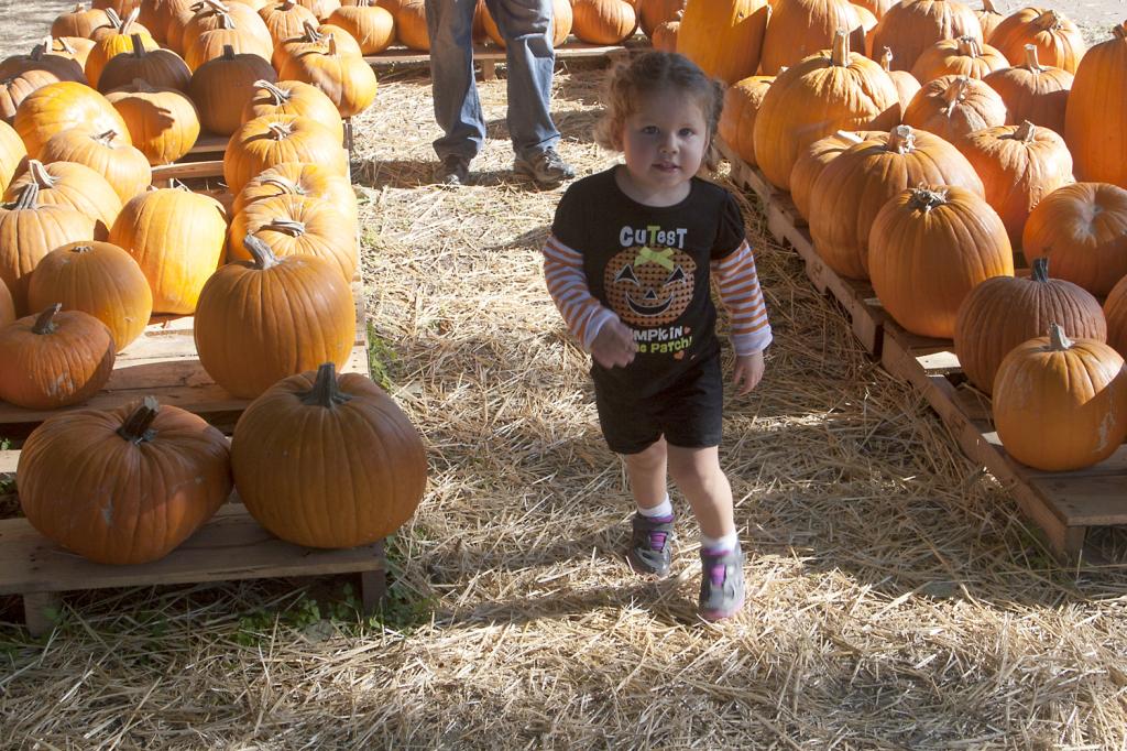 pumpkinpatch2014_12