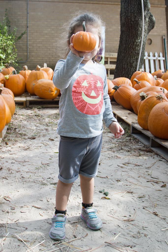pumpkin-patch-2015-1