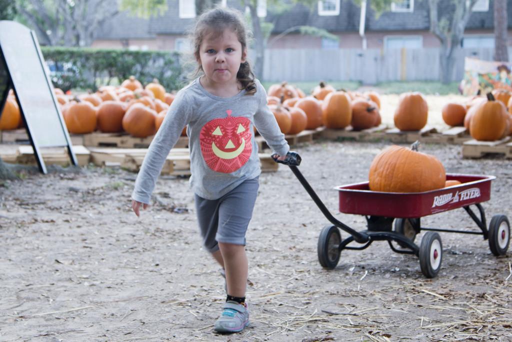 pumpkin-patch-2015-10