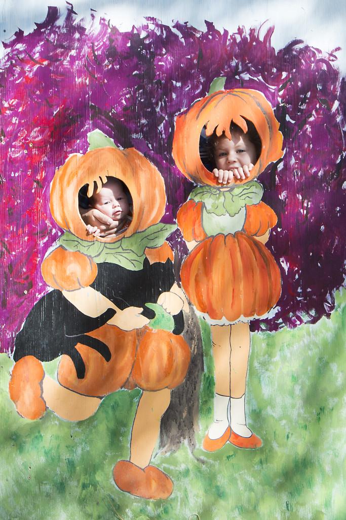 pumpkin-patch-2015-2