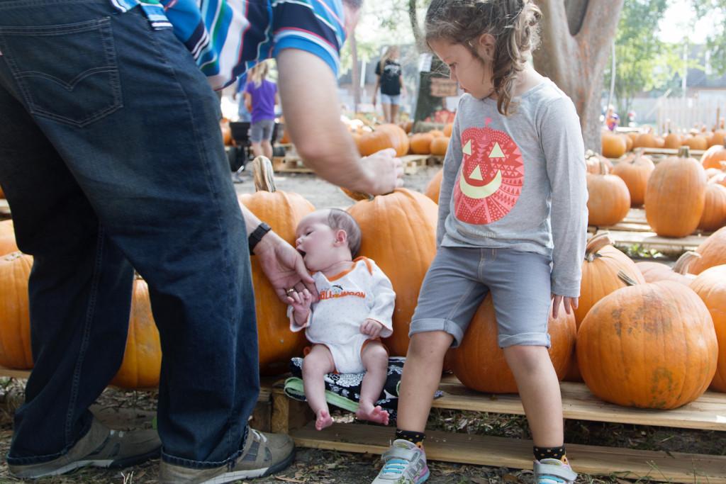 pumpkin-patch-2015-3