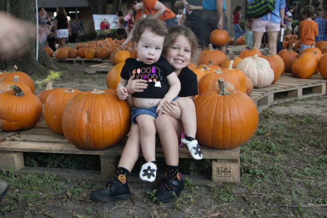 pumpkin-patch-2016-1